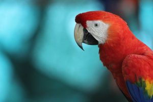 The People Behind The Parrots Macaw Recovery Network